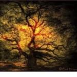 Magic Tree Alchemist Gift